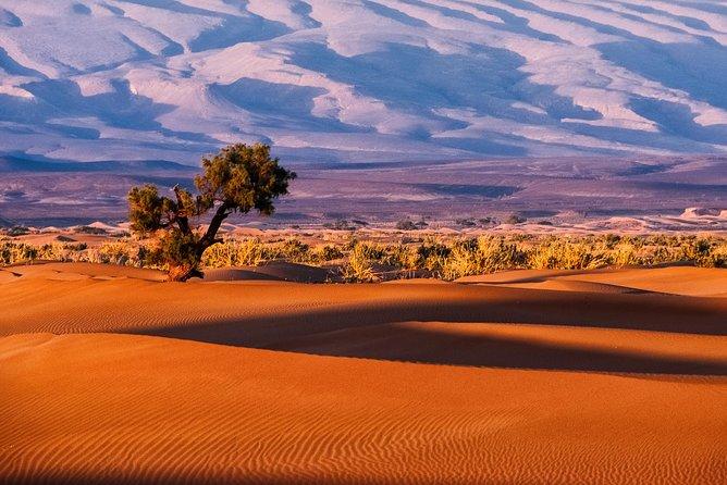 2 Jours au SAHARA DESERT: Marrakech - Desert de Zagora