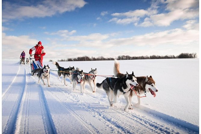 Private tour in Rovaniemi Husky sledding