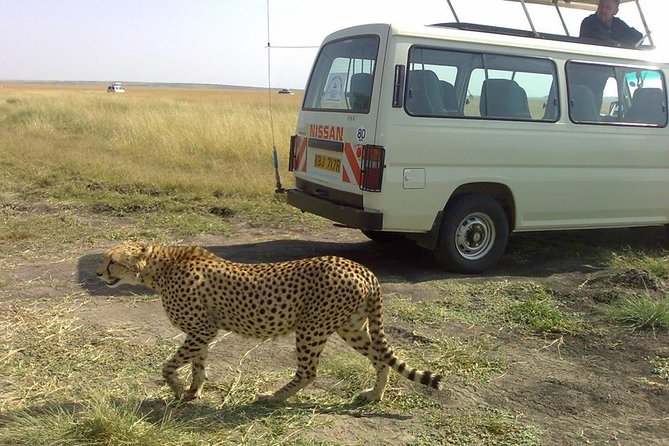 2 Days Budget Luxury Maasai Mara Safari