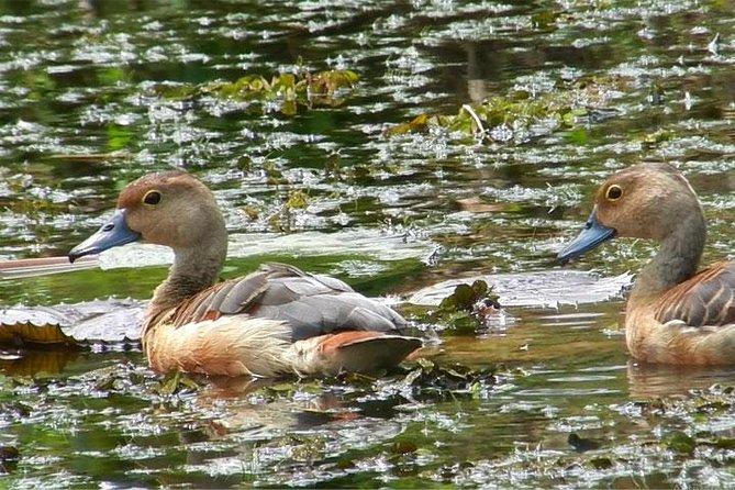 Bird watching in Colombo Wetlands- Guided Bird Walks