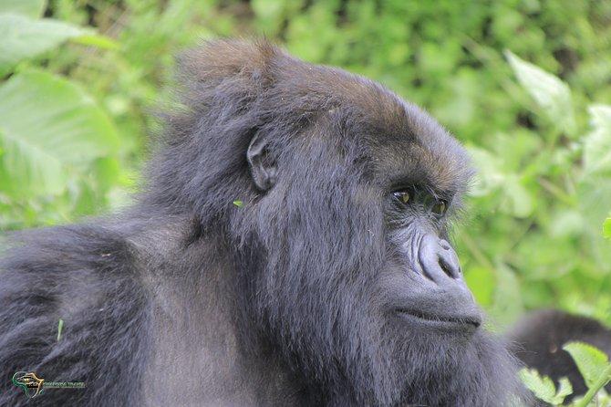 10 days Kigali, Kahuzi Biega and Virunga Classic Package