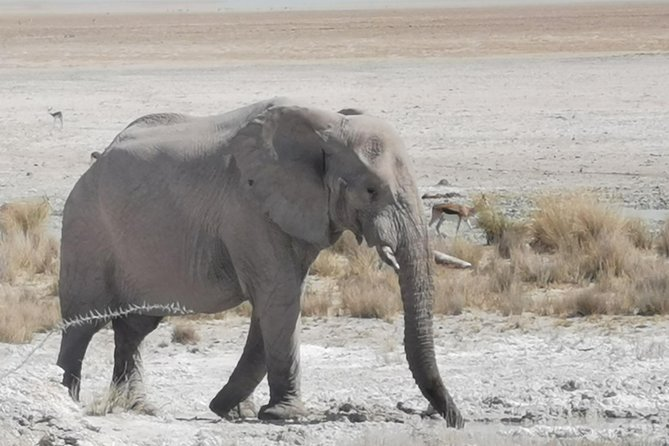 5 Day Etosha National Park Private Guided Safari Tour