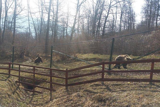 Small-Group Libearty-Liberty Bear Sanctuary Zarnesti Trip from Brasov