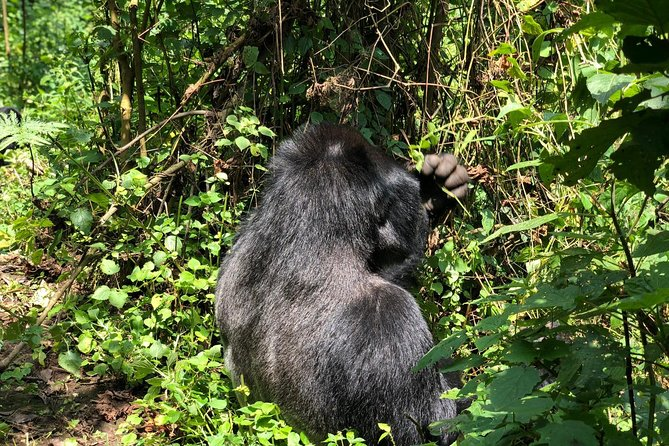 4 Day Uganda Gorilla Trekking Safari with Lake Bunyonyi