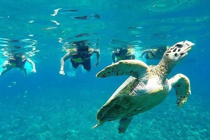 Snorkeling Tour In Gili Islands Pick Up From Lombok Or Gili