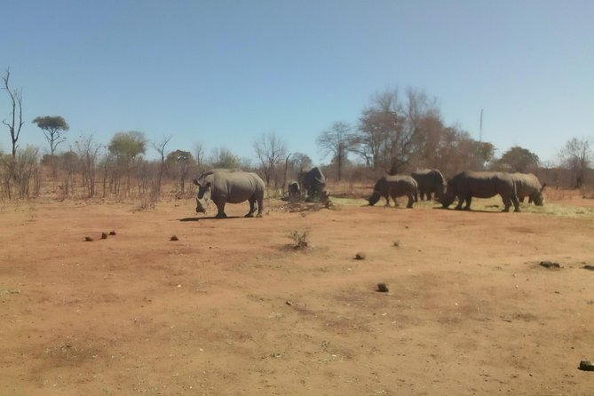 Short Rhino safari walk. photo 22