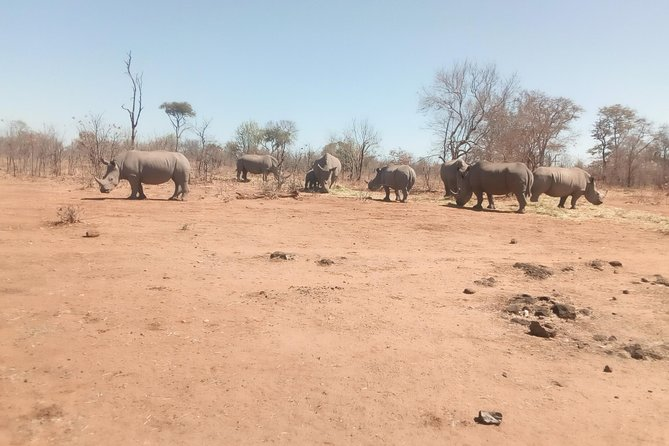 Short Rhino safari walk. photo 26