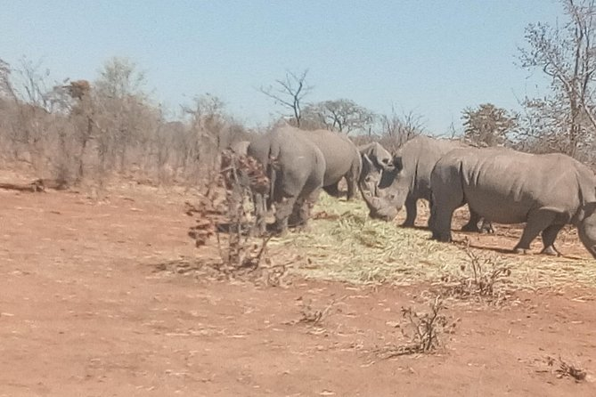 Short Rhino safari walk. photo 6