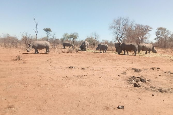 Long Rhino walk photo 17