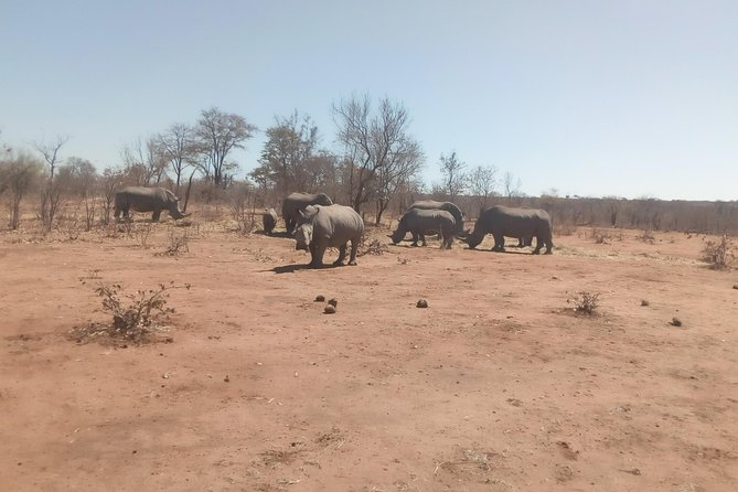 Short Rhino safari walk. photo 10