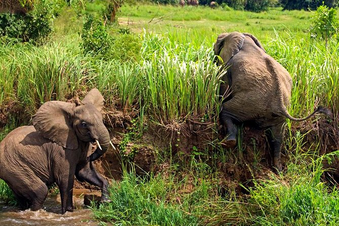 6 Day Uganda Safari in Murchison Falls and Bwindi Impenetrable Park photo 22