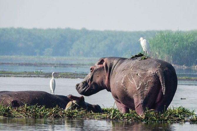 6 Day Uganda Safari in Murchison Falls and Bwindi Impenetrable Park photo 11