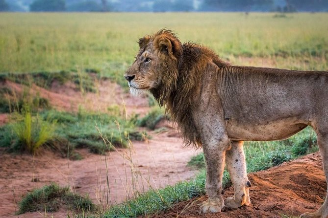 6 Day Uganda Safari in Murchison Falls and Bwindi Impenetrable Park photo 21