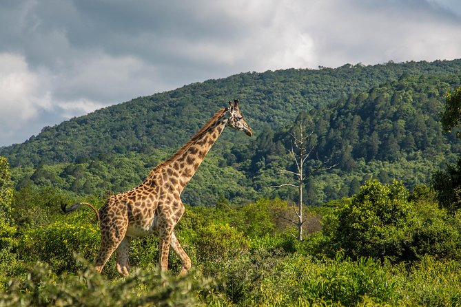 A Day Trip In Arusha National Park From Arusha Town