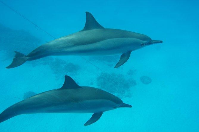 Dolphin House Sataya Reef Full Day Snorkel Trip - Marsa Allam