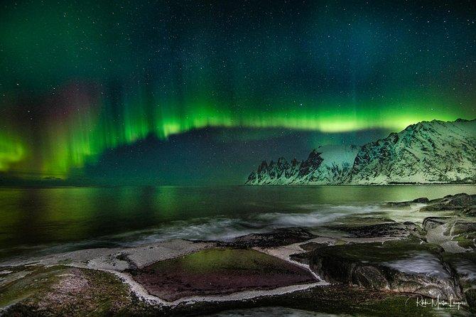 Aurora Safari
