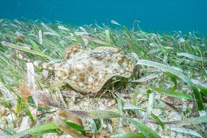 Cozumel Express 2-Tank Dives from Playa del Carmen