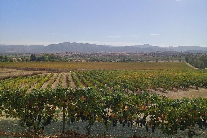 wine tours and driver service through valle de guadalupe, Ensenada B.C. Mexico