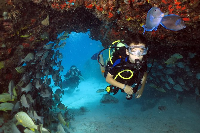 Discover Scuba Diving Course in Playa del Carmen with Two Coral Reef Dives photo 1