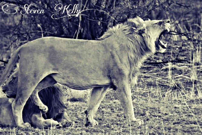 Kruger Lion Expedition with the Little Lionman Steve Kelly photo 7