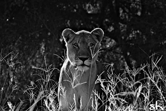 Kruger Lion Expedition with the Little Lionman Steve Kelly photo 30