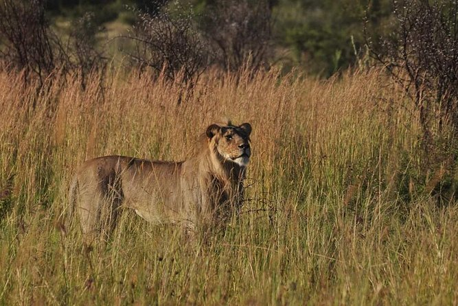 Kruger Lion Expedition with the Little Lionman Steve Kelly photo 3