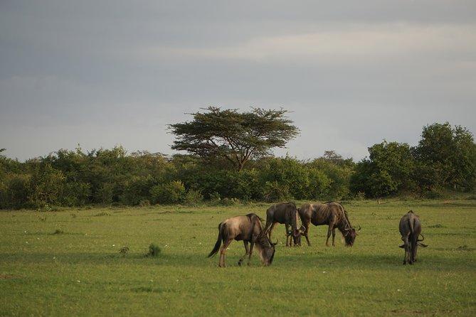 6 Days Group Joining Masai Mara, Lake Nakuru & Amboseli Safari