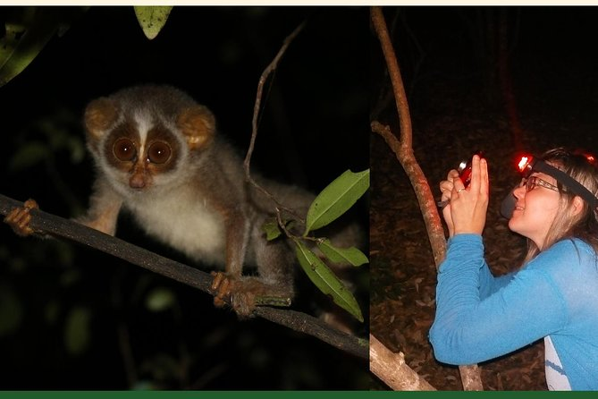 Sigiriya Loris Night Trail