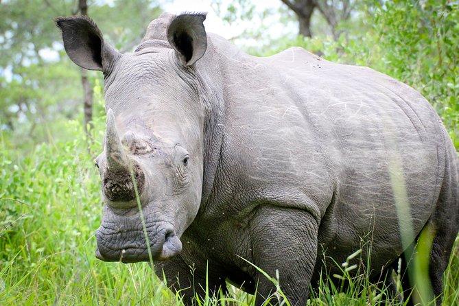 Zziwa Rhino Sanctuary trekking
