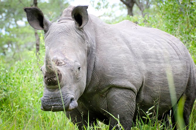 Zziwa Rhino sanctuary Full package