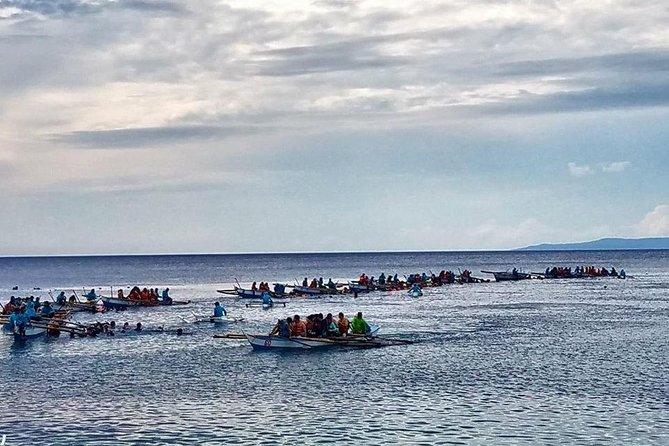 Pescador Island + Whaleshark Encounter + Sumilon Island Adventure