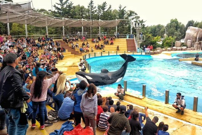 Excursion to the Mundo Marino Oceanarium