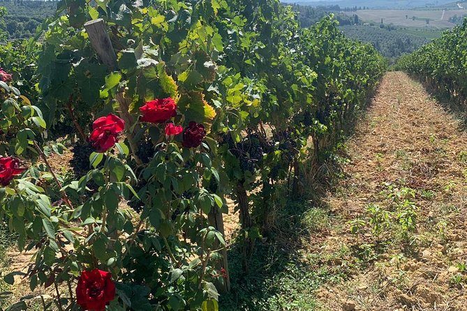 Chianti Vineyards Tours in Private Luxury Van from Florence photo 23