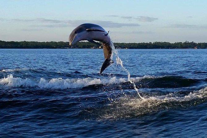 Alabama Gulf Coast Dolphin Cruise
