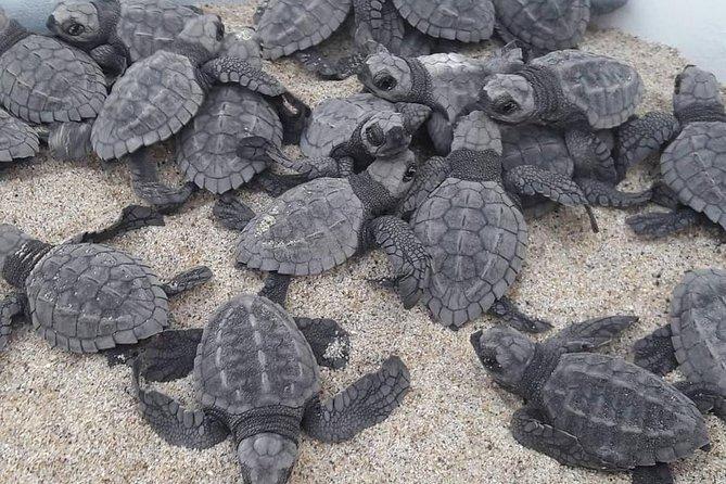 Sea Turtle Release Experience