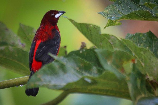 Quininí Nature Reserve Birds & Butterflies
