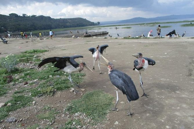 2 Days Ethiopian Rift Valley Lakes Tour from Addis Ababa