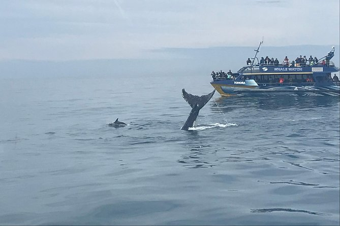 Kaikoura Day Trip - Whales Encounter photo 6