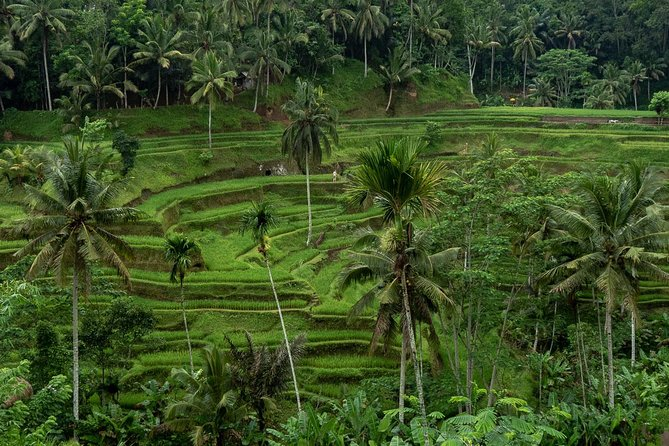 Bali Full-Day Traditional Village & Sightseeing with Lunch