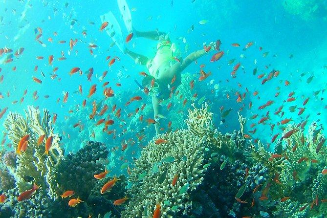 Coral Garden Amazing snorkel sea excursion - Marsa Alam