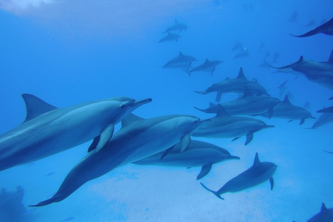 Dolphin house Satayeh reef snorkel sea excursion - Marsa Alam