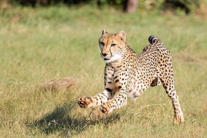 Exclusive Private Cheetah Centre Tour
