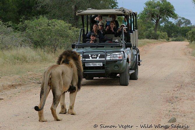 3-Day Kruger National Park Open Vehicle Safari