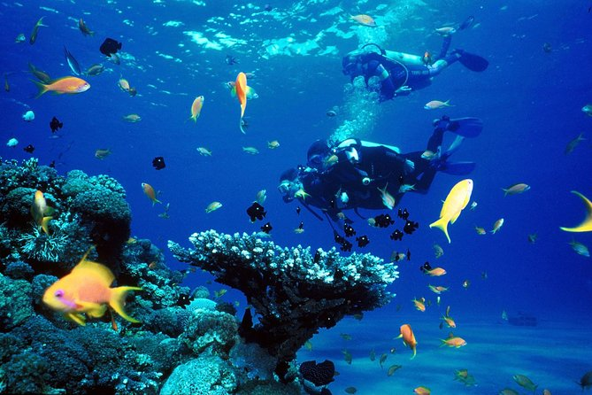 Discover Dahab Abu Galum & Blue Hole and Safari From Sharm El Sheikh photo 4