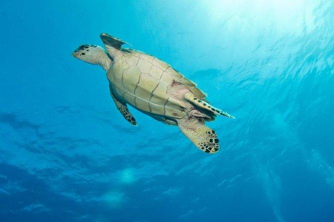 Grand Turk Exclusive Supreme Snorkeling Tour