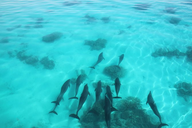 Swimming with Dolphin , Snorkeling ,Swimming ,Lunch and Water sport. photo 12