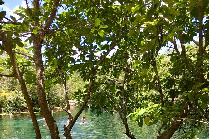 2 Cenotes, bikes & lunch