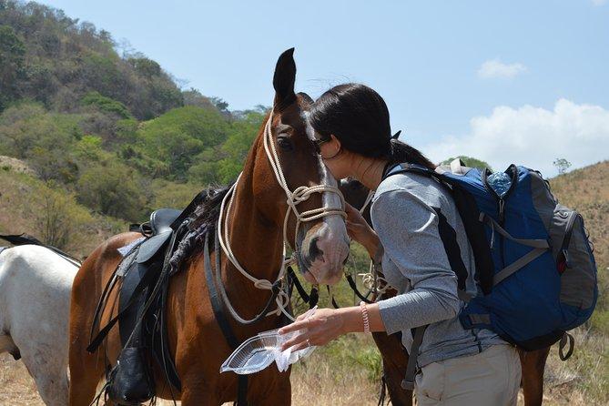 Horseback Riding and Banana Plantation Tour from La Cruz