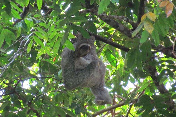 Manuel Antonio National Park Day Trip from San Jose