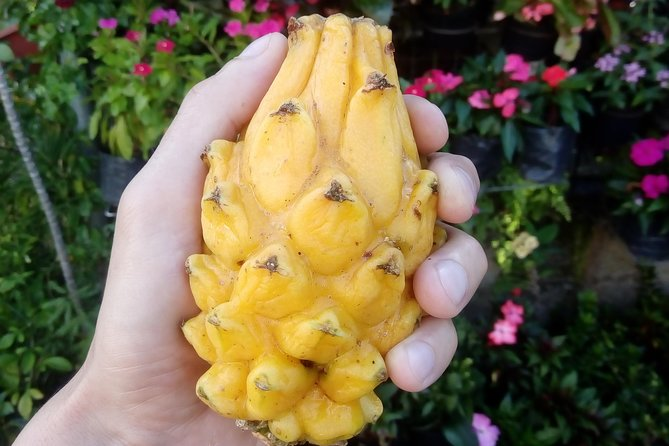 Tropical Exotic Fruits Tour in Laureles